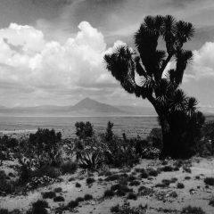 Paisaje del altiplano. © Herederos de Juan Rulfo